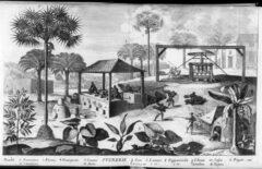 """Illustration of sugar production from Jean-Baptiste Du Tetre's book """"Histoire générale des Antilles habitées par les François"""", Volume 2, Paris 1667."""