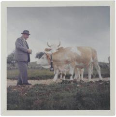 The great-grandfather Ernst Luginbühl-Bögli with cow.