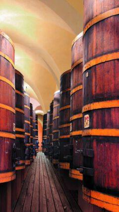 Storage in oak barrels.