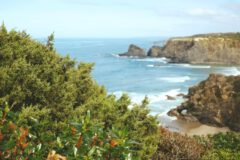 Cistus ladanifer and juniper on the steep cliffs.