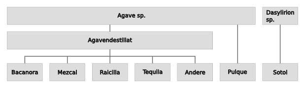 Classification of agave spirits.