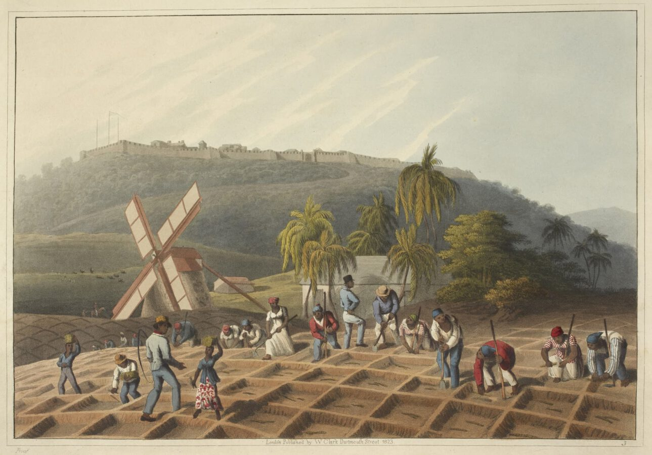 William Clark - Ten Views in the Island of Antigua (1823) - Plate 3: Working slaves on the plantation planting sugar cane.
