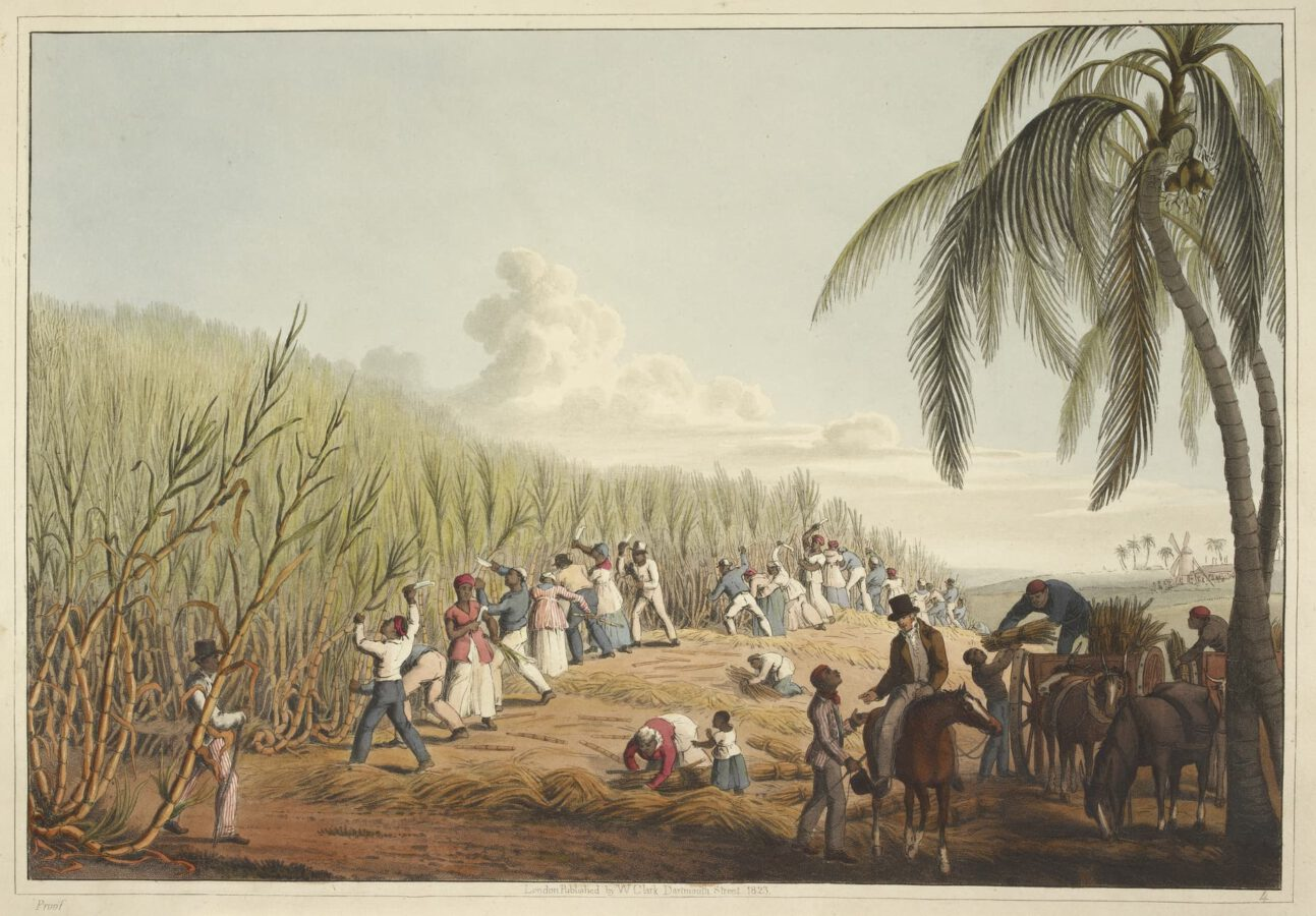 William Clark - Ten Views in the Island of Antigua (1823) - Plate 4: Slaves cutting sugar cane.