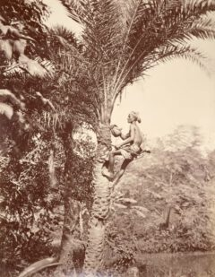 A Toddy gatherer, Bengal.