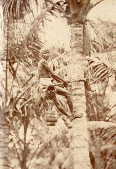 Toddy-man climbing a tree.